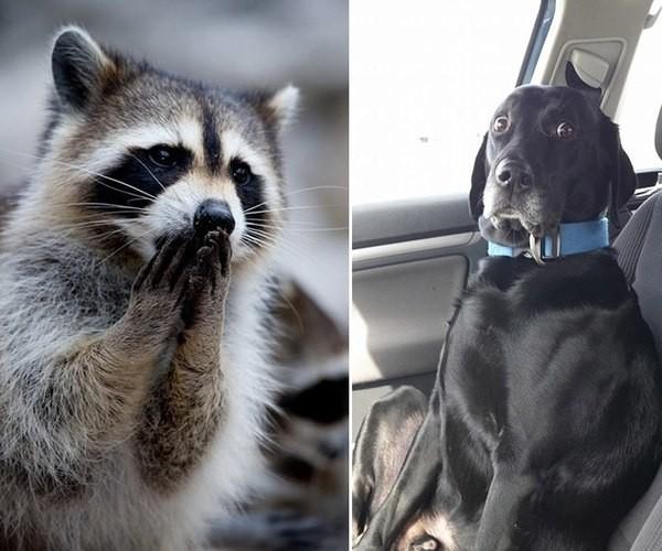 """""""А что это вы тут делаете?"""" - забавные фотографии удивлённых животных животные, факты"""