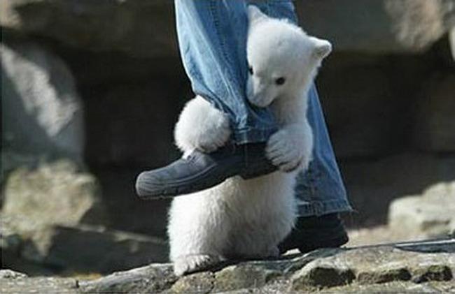 Неравная схватка человека и белого медведя. животные, нападения, не для слабонервных, человек
