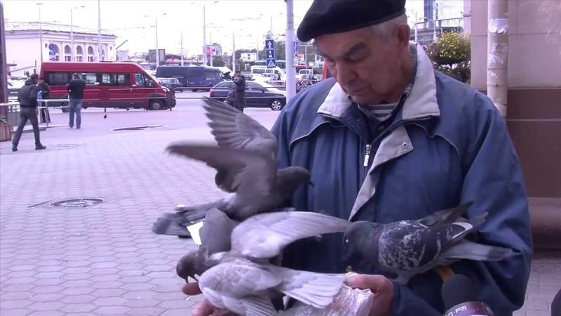 Стая голубей заклевала беззащитного пенсионера. животные, нападения, не для слабонервных, человек