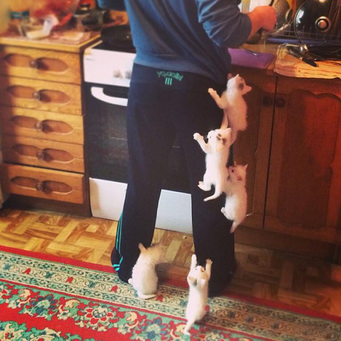 Обезумевшие домашние кошки напали на своего хозяина. животные, нападения, не для слабонервных, человек