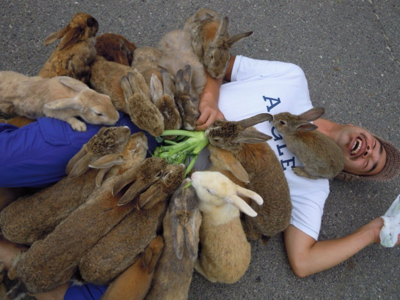 Стая разъярённых кроликов заживо сжирает человека. животные, нападения, не для слабонервных, человек