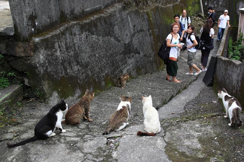 Кошки — хитроумные убийцы, они загнали своих жертв в тупик, лишив их шанса на выживание. животные, нападения, не для слабонервных, человек