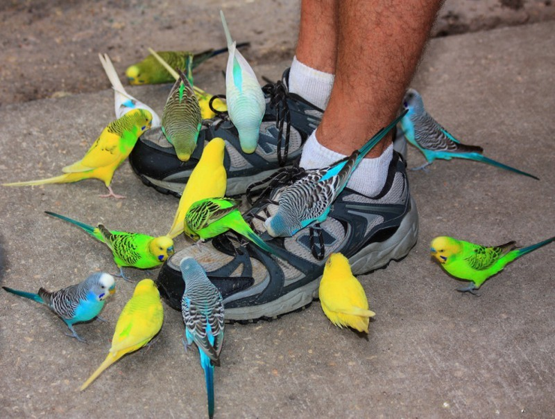 Остервенелые птицы заживо заклёвывают свою добычу. животные, нападения, не для слабонервных, человек