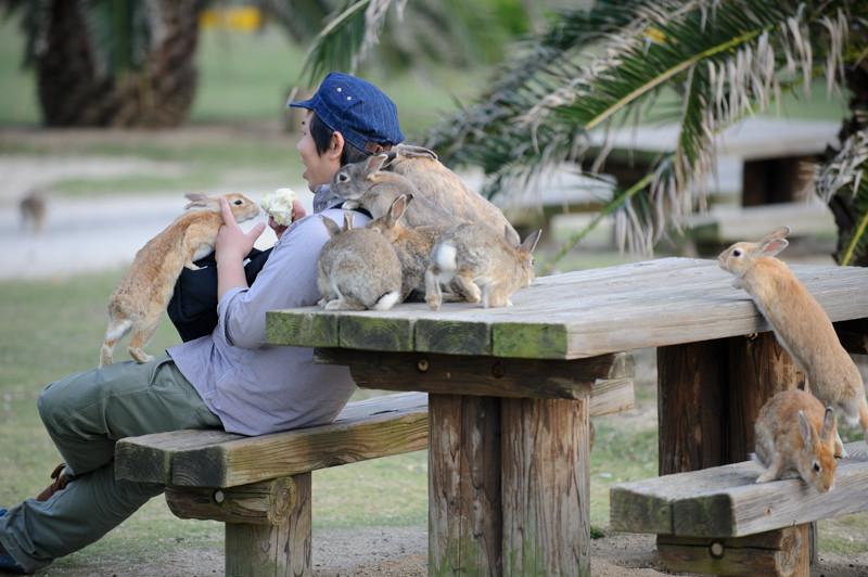 Коварные кролики нападают исподтишка, со спины. животные, нападения, не для слабонервных, человек
