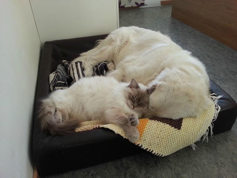 …а в другую – товарищи по обнимашкам. животные, коты