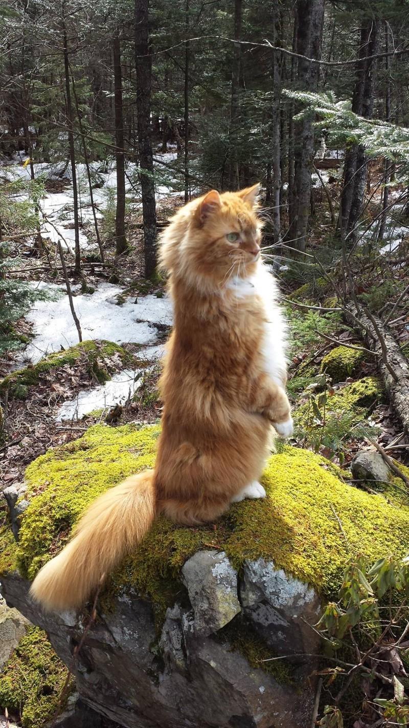 Они храбрые маленькие путешественники…. животные, коты