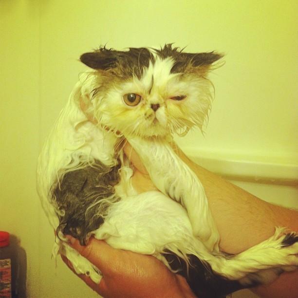 Потому что они ненавидят воду из ванны… животные, коты