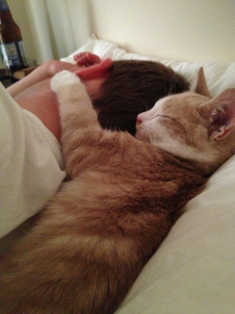 Но главная причина, по которой мы добровольно вручаем им наши сердца – они остаются нашими верными друзьями на всю жизнь. животные, коты
