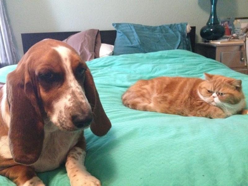 Потому что в одну секунду они в смертельной вражде с собаками… животные, коты