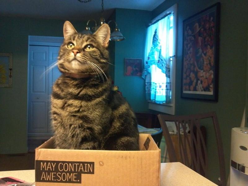 Потому что они знают, как использовать коробки во благо… животные, коты