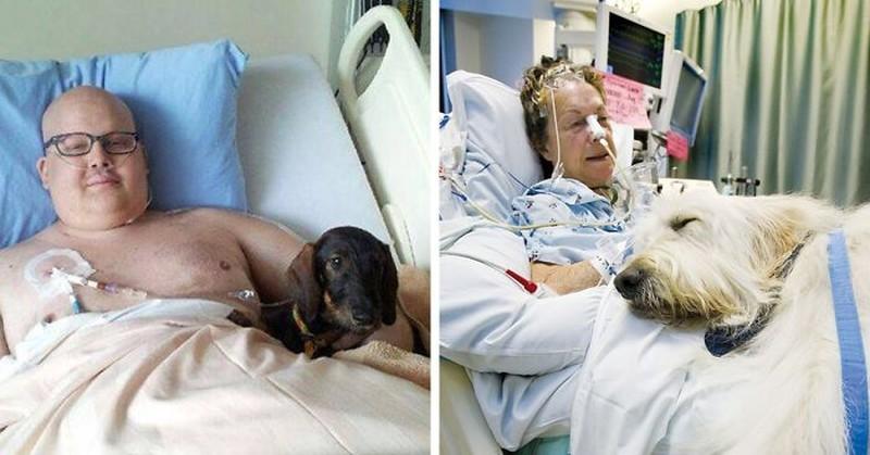В канадской больнице питомцам разрешают навещать больных хозяев больница, животные, терапия