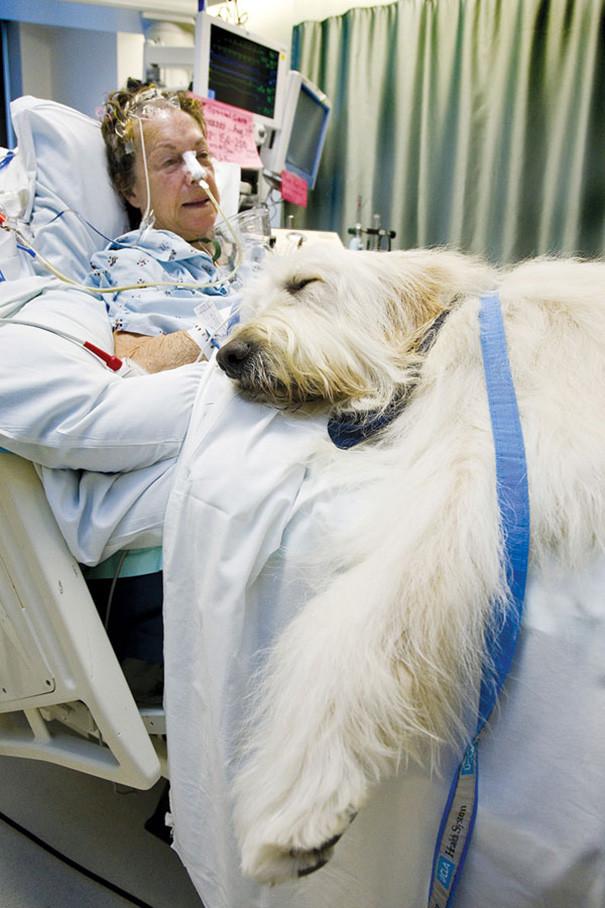 «Мы тайно пронесли Чейза в отделение интенсивной терапии. Результат был невероятным. Когда Закари осознал, что ему не удастся одолеть рак, он заставил меня пообещать организовать эту программу». больница, животные, терапия