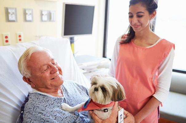 «На время они забывают о больнице и своей болезни». больница, животные, терапия