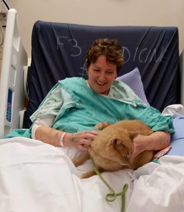 Питомцы могут приходить на час раз в неделю. Всех животных тщательно моют перед визитом и в больнице не подпускают к другим пациентам. больница, животные, терапия