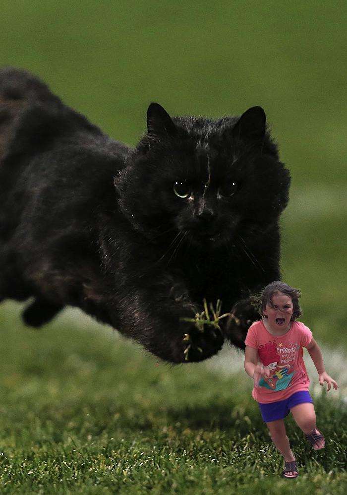 4. Поход в зоопарк обернулся не так, как планировалось... интернет, кот, мемы, фотошоп