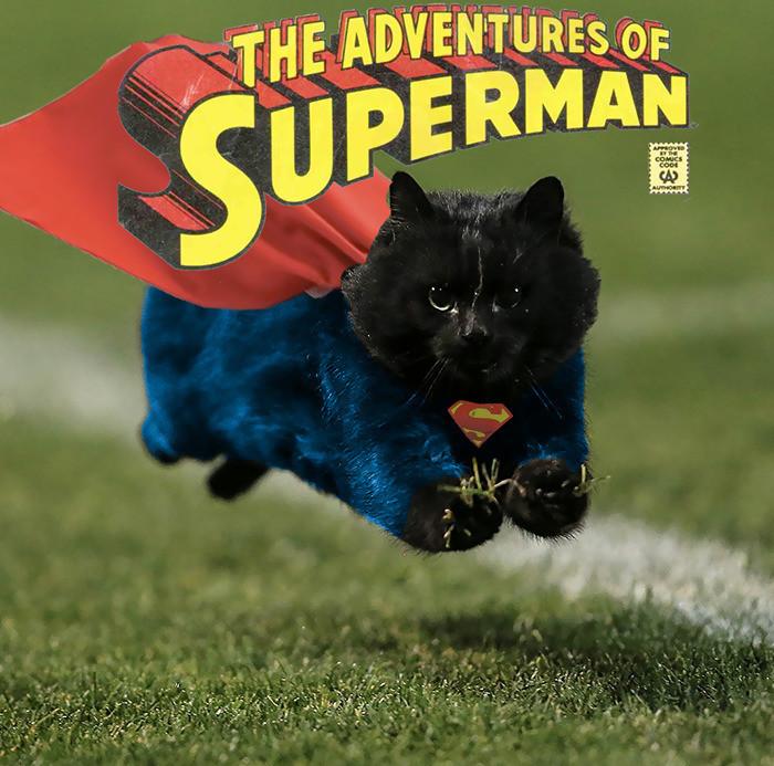 7. Суперкот интернет, кот, мемы, фотошоп