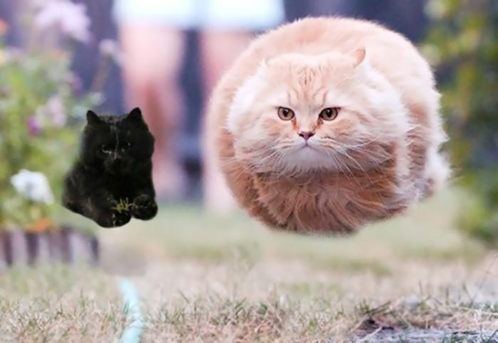 3. Учитесь у мастера интернет, кот, мемы, фотошоп