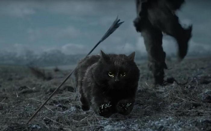 8. Кот сумел ловко увернуться интернет, кот, мемы, фотошоп