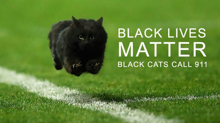 """11. """"Черный кот имеет значение"""" интернет, кот, мемы, фотошоп"""