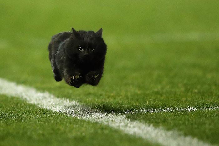 """Блогеры отфотошопили """"летающего кота"""", выбежавшего на поле регби интернет, кот, мемы, фотошоп"""