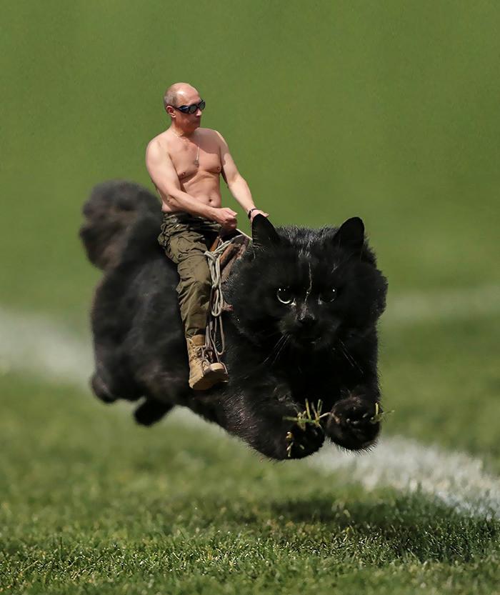 2. Путин на коте интернет, кот, мемы, фотошоп
