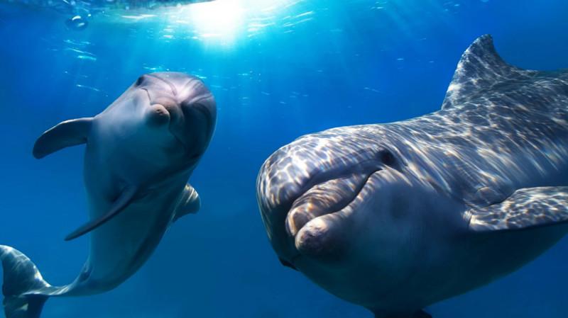 Дельфины. животные, интересные факты, сон