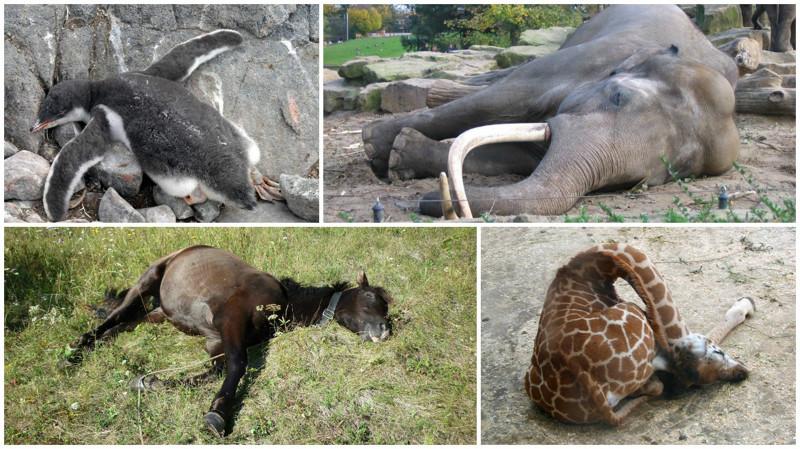 10 удивительных фактов о том, как спят животные животные, интересные факты, сон