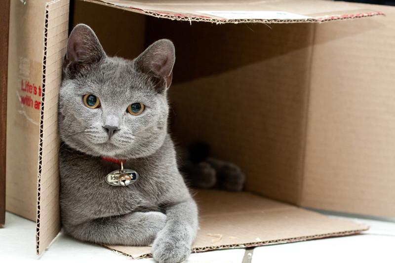 Почему кошки любят коробки? животные, факты