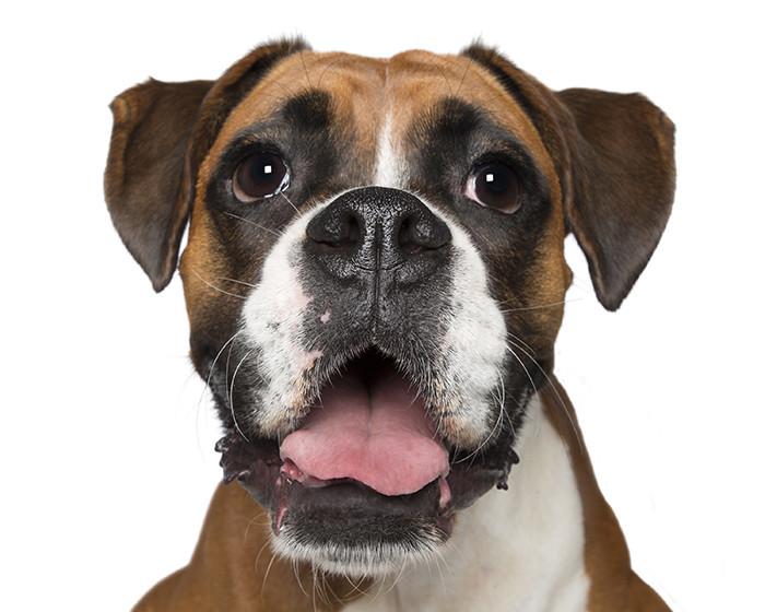Собаки-улыбаки от австралийского фотографа животные, собаки, улыбка, фотография