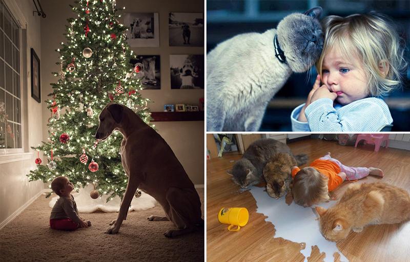 14 доводов в пользу срочной покупки пушистого любимца вашим детям дети, животные