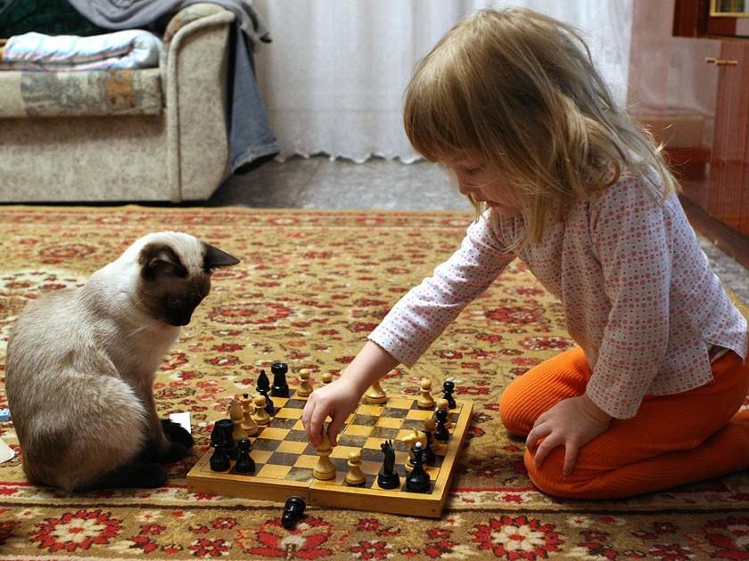 Обучит шахматам... дети, животные