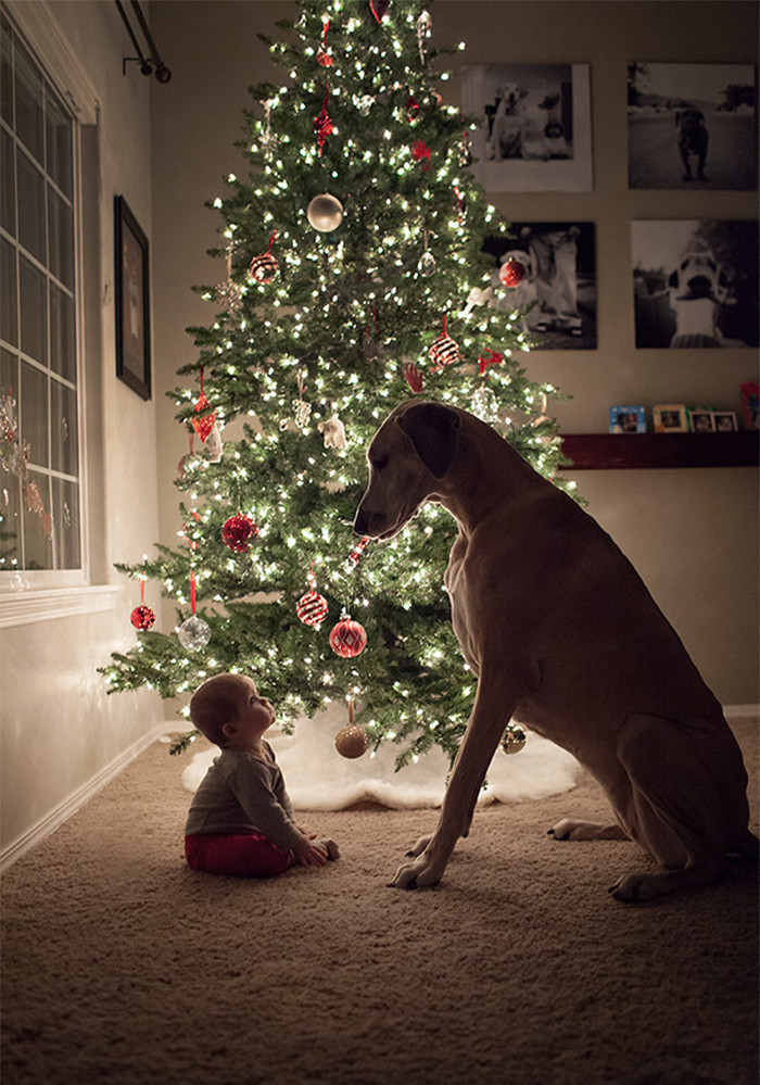 Хороший пес - начало новогодней сказки дети, животные