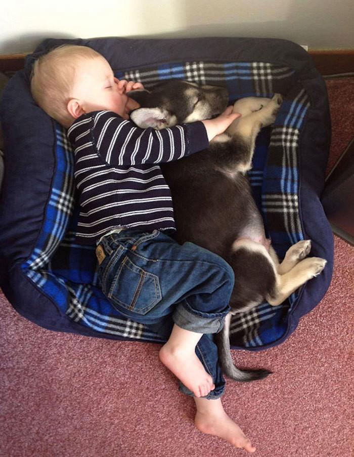 С теплым другом лучше спится... дети, животные