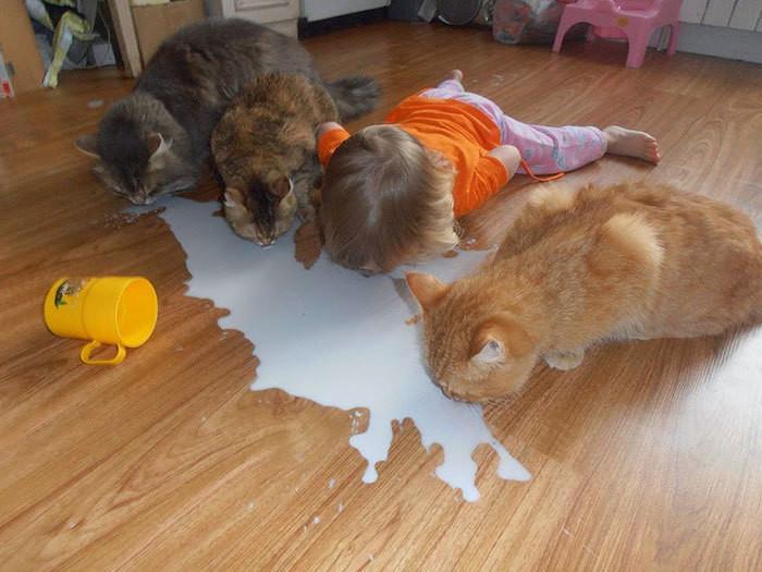 ...и завтракать за компанию намного веселее! дети, животные