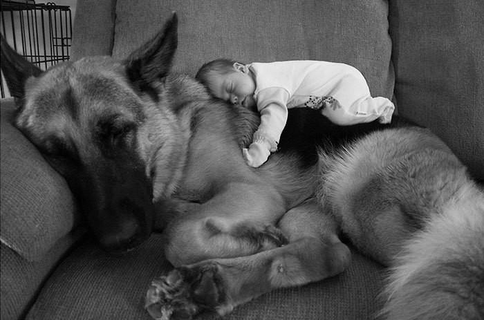 ...и защитой дети, животные