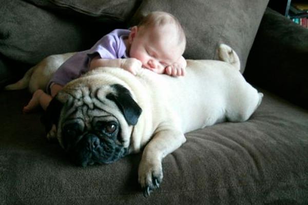 Пушистый друг побудет подушкой... дети, животные