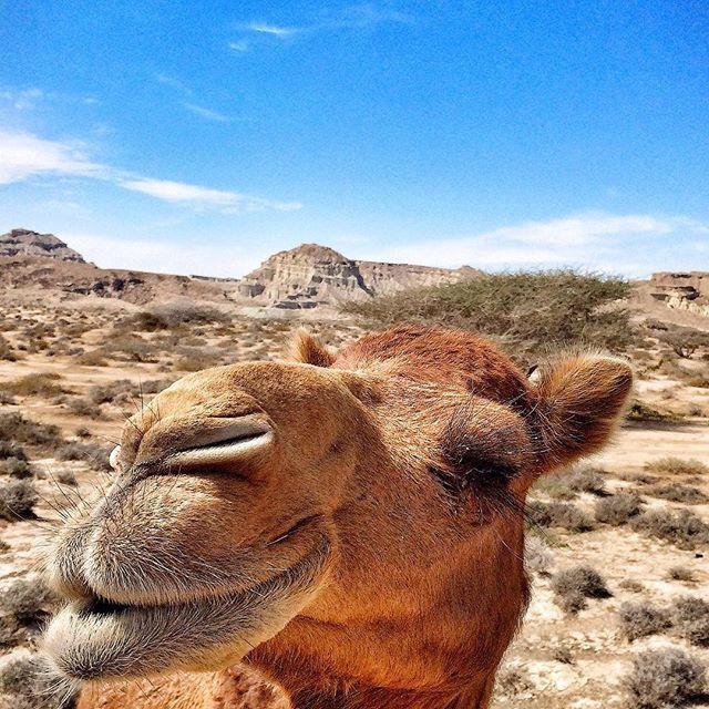 Отпуск в Египте животные, прикол, сэлфи
