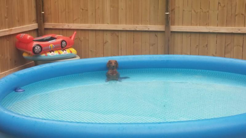 """16. """"Я не писал в бассейн. Честно!"""" питомец, шалость"""