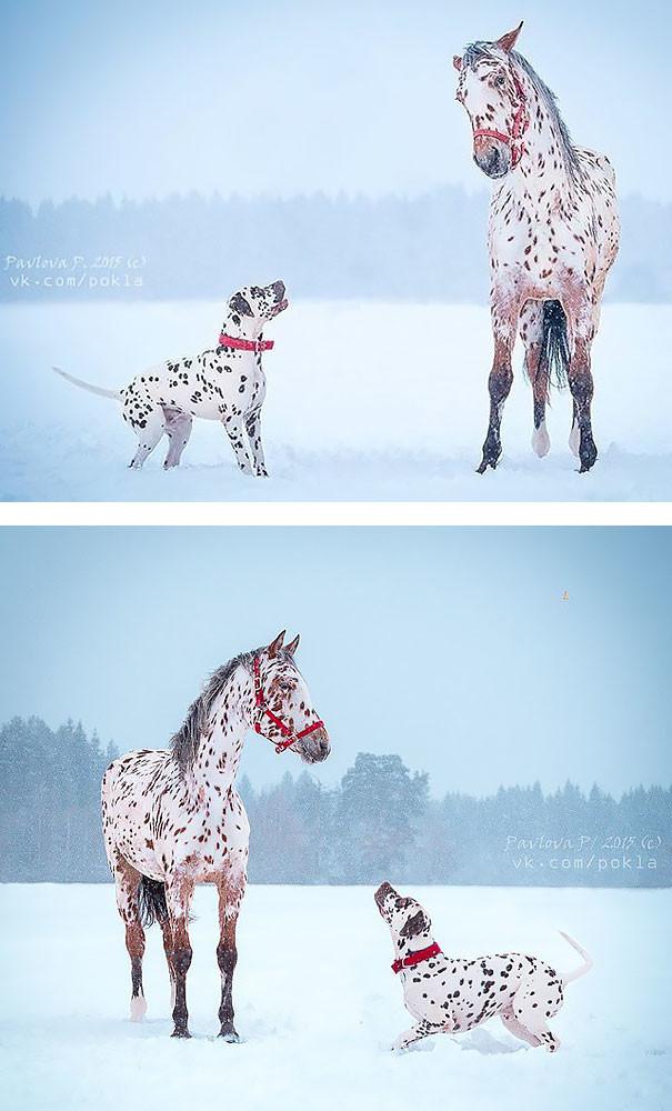 Эти животные такие разные - и все же они так похожи! животные, фото, юмор