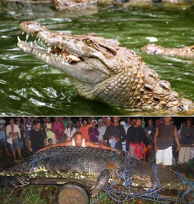 6. Морской крокодил животные, морские обитатели