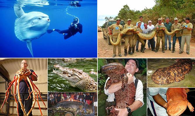 Самые большие животные в мире животные, морские обитатели