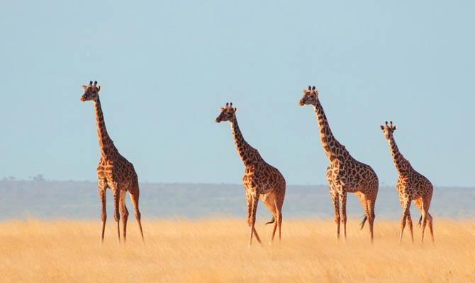 3. Жираф животные, морские обитатели