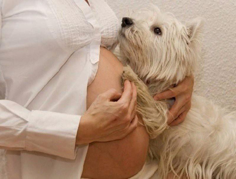 Единственные животные, которые действительно рады пополнению в семье!  беременные, животные, собака, факты