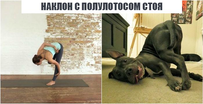 18 асан йоги в исполнении милейших животных асаны, животные, йога