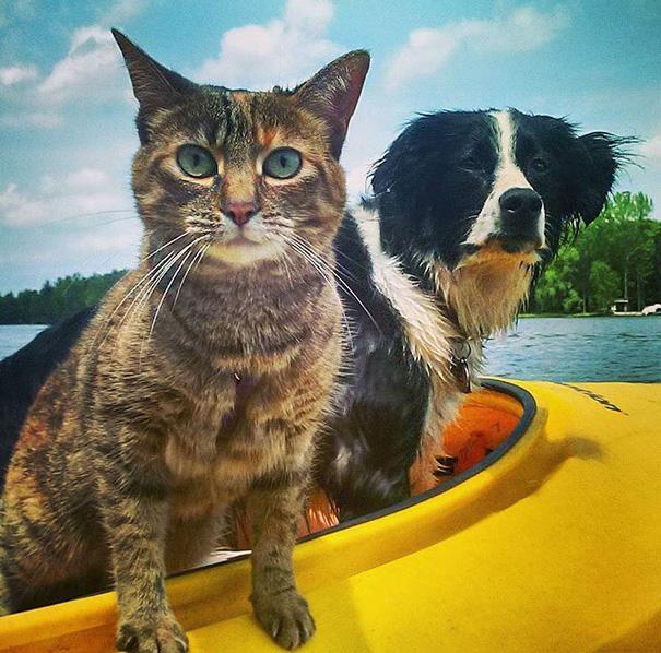 Речной патруль кошки, природа, путешествие, фото, юмор