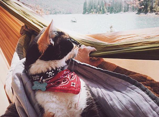 Н-да, погода не радует... кошки, природа, путешествие, фото, юмор