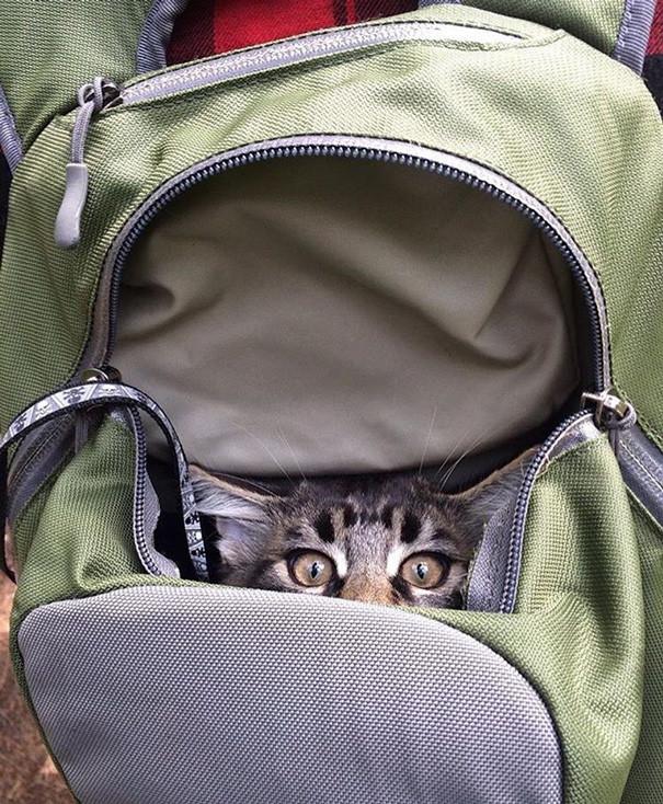 Тсс! Хозяин думает, что тут все еще колбаса! кошки, природа, путешествие, фото, юмор