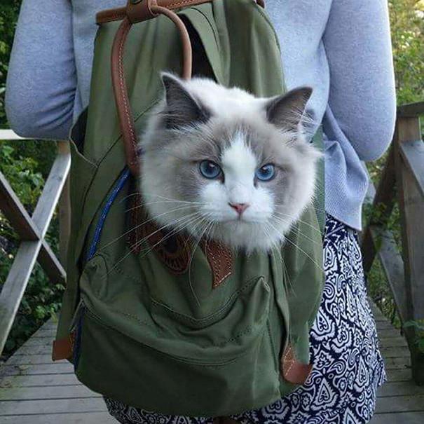 Не уверен, что мне это понравится кошки, природа, путешествие, фото, юмор