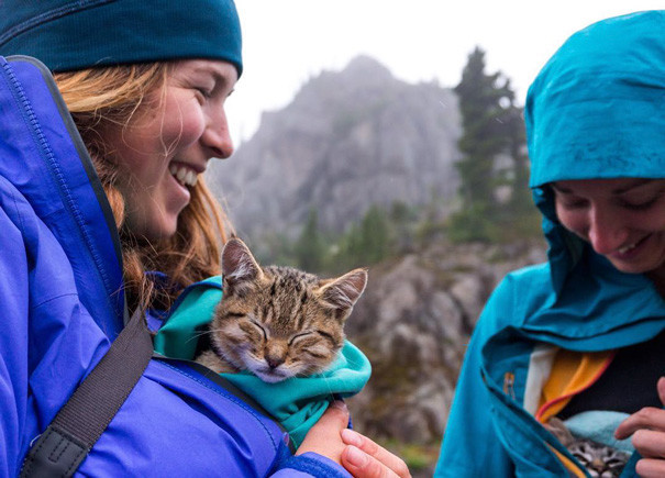 Поход для младшей группы кошки, природа, путешествие, фото, юмор