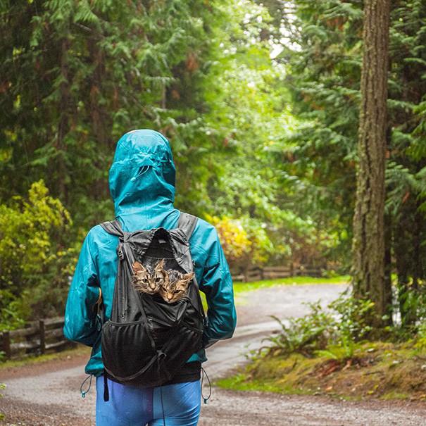 Это вам рюкзак, а нам - двухместная палатка! кошки, природа, путешествие, фото, юмор
